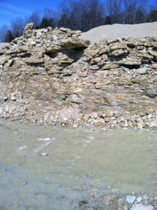 Exposure of Brassfield Limestone at New Point Stone Company, Ripley County, Indiana. (Height of exposure is approximately 3 meters.)