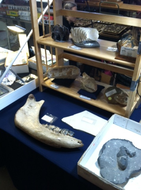 Close-up view of specimens at a third booth at the MAPS show.