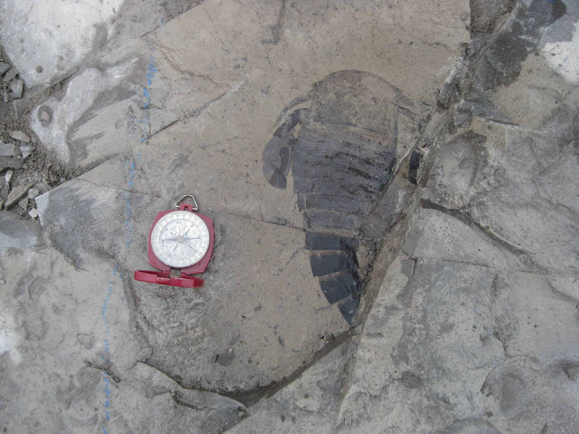 On The Trail Of The Elusive Eurypterids.